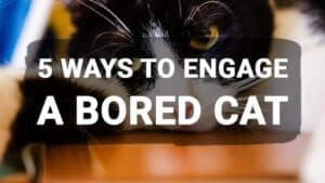 5 Ways to Engage a Bored Cat