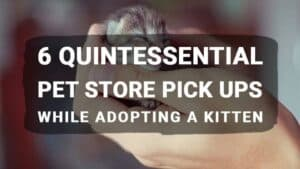 6 Quintessential Pet Store Pick Ups While Adopting a Kitten