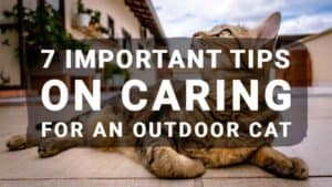 7 Important Tips on Caring for an Outdoor Cat