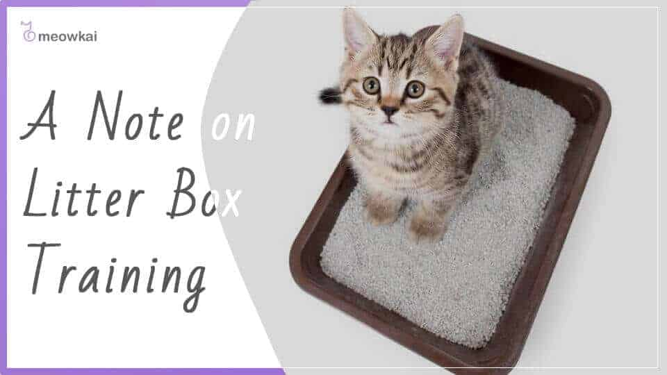 A-Note-on-Litter-Box-Training