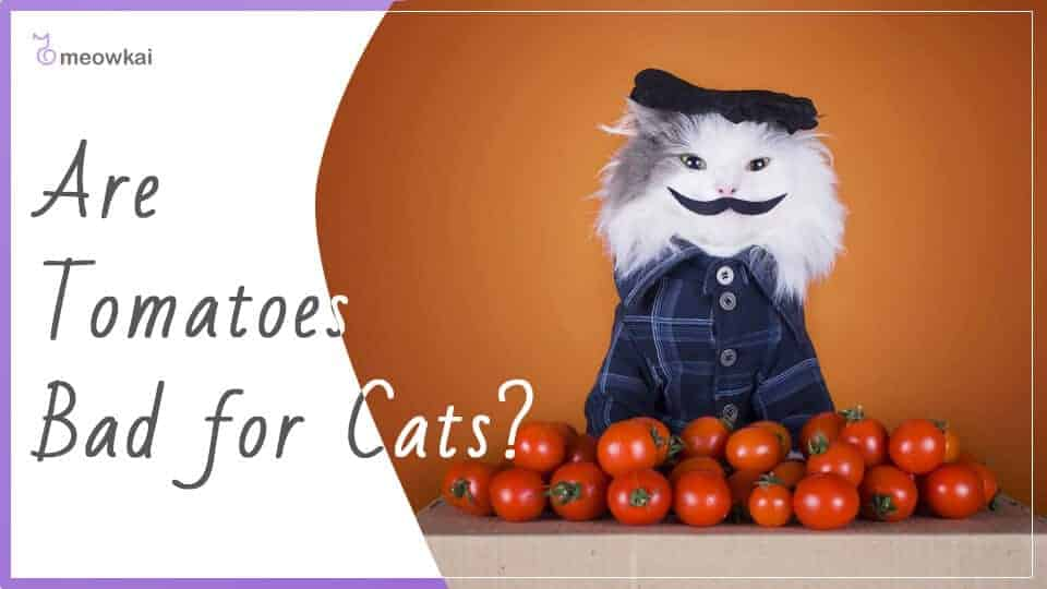 Are-Tomatoes-Bad-For-Cats