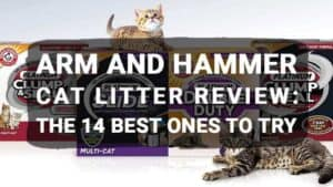 Arm and Hammer Cat Litter Review: The 14 Best Ones to Try