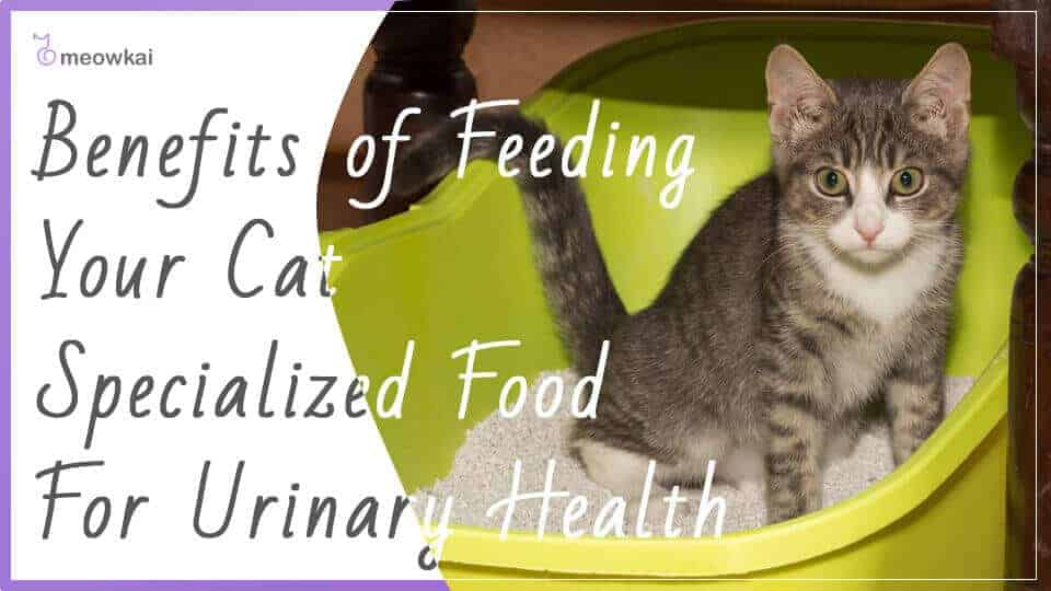 Benefits-of-Feeding-Your-Cat-Specialized-Food-For-Urinary-Health