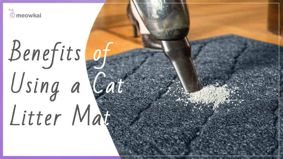 Benefits-of-Using-a-Cat-Litter-Mat