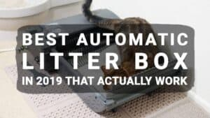 Best Automatic Litter Box in 2019 That Actually Work