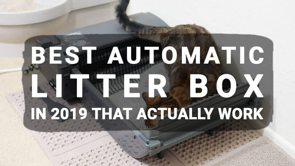Best-Automatic-Litter-Box