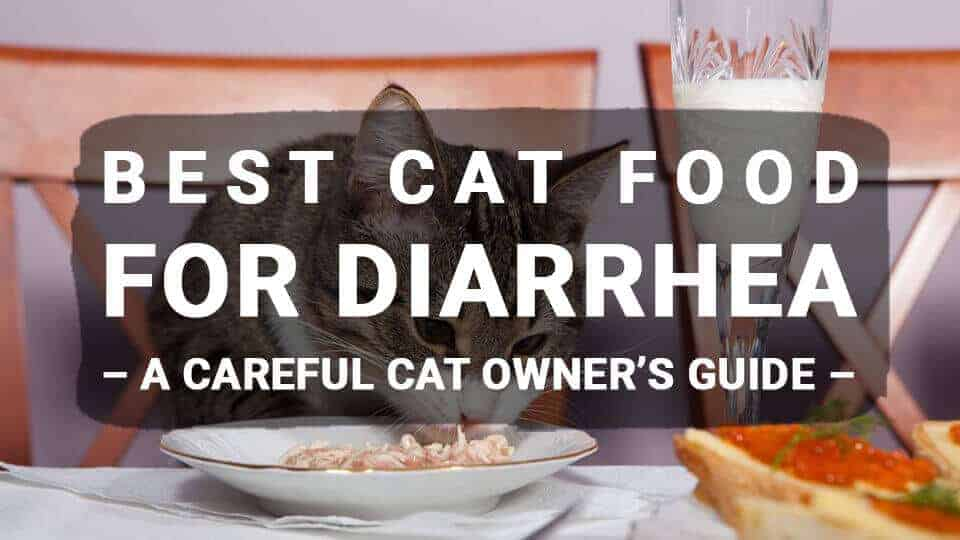 Best Cat Food For Diarrhea – A Careful Cat Owner's Guide (Updated 2019)