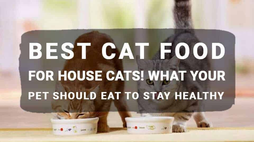 Best Cat Food for House Cats! What Your Pet Should Eat to Stay Healthy