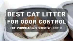Best Cat Litter for Odor Control 2019 – The Purchasing Guide You Need