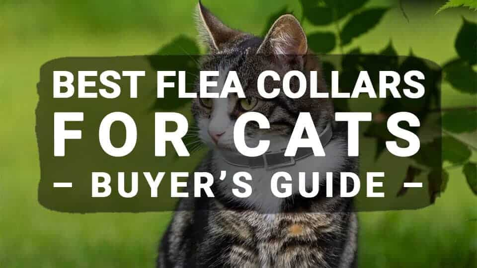 Best-Flea-Collars-For-Cats-Buyers-Guide