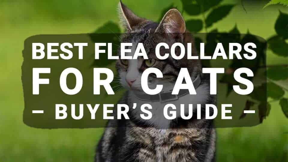 Best Flea Collars For Cats – Buyer's Guide (Updated 2019)