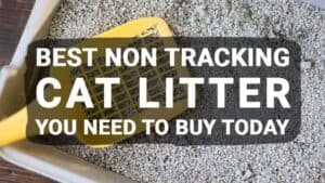 Best Non Tracking Cat Litter You Need to Buy Today (Updated June 2018)