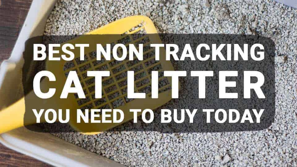 Best-non-tracking-cat-litter