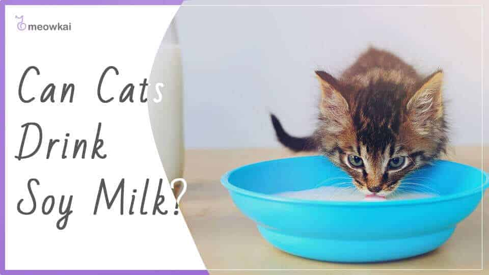 Can-Cats-Drink-Soy-Milk-1