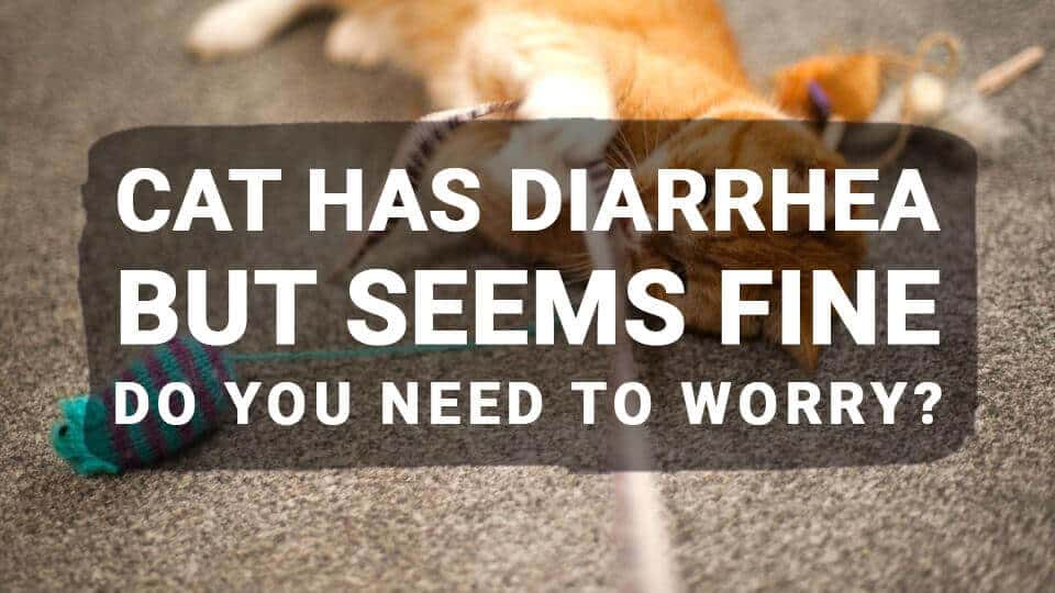 Cat Has Diarrhea But Seems Fine: Do You Need to Worry?