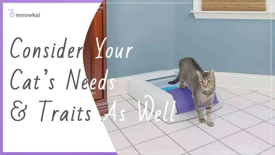 Consider-Your-Cats-Needs-&-Traits-As-Well