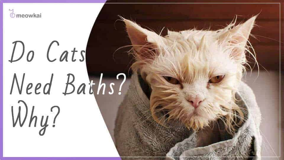 Do-Cats-Need-Baths