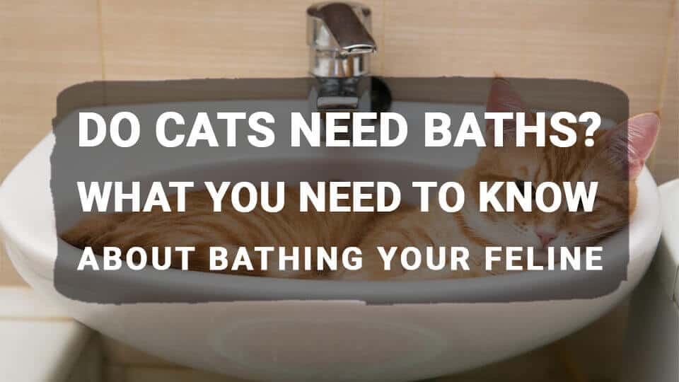Do Cats Need Baths? What You Need to Know About Bathing Your Feline