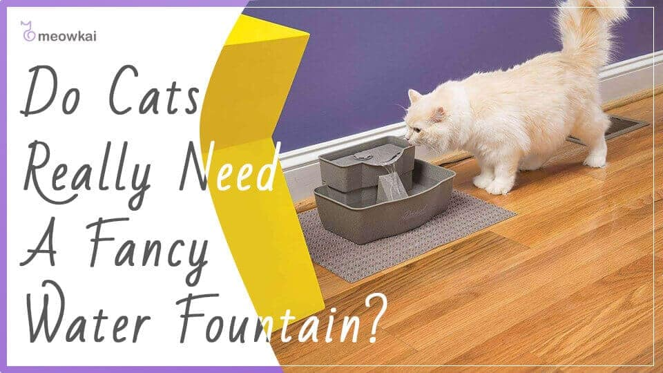 Do-Cats-Really-Need-A-Fancy-water-fountain