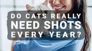 Do Cats Really Need Shots Every Year?