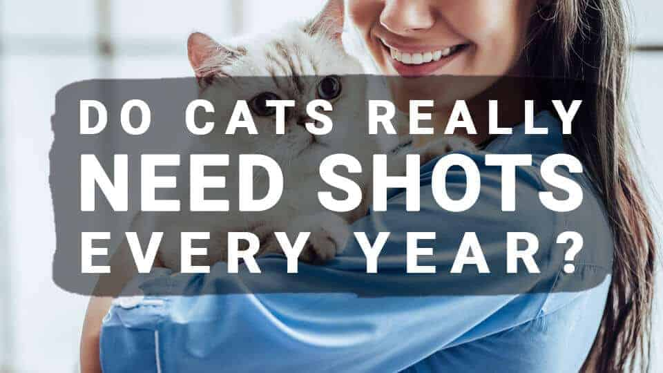Do Cats Really Need Shots Every Year?