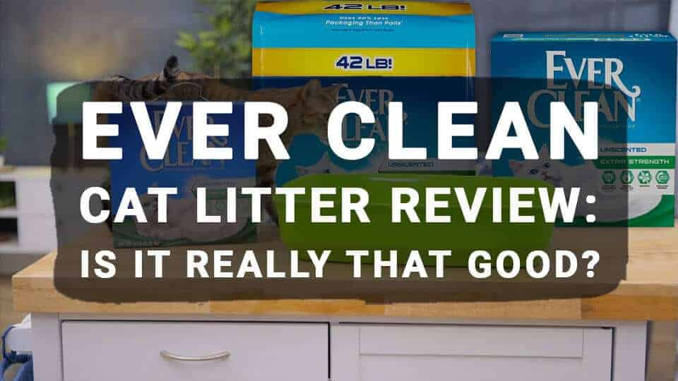 Ever Clean Cat Litter Review: Is It Really That Good?