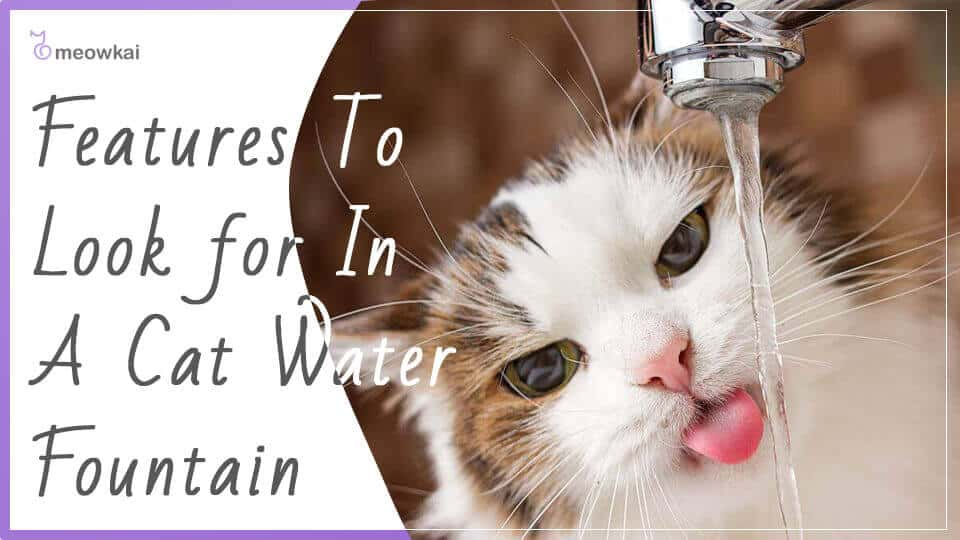 Features-to-look-for-in-a-cat-water-fountain