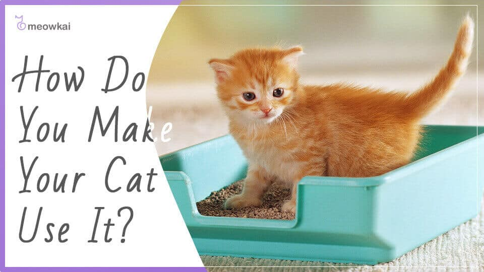 How-Do-You-Make-Your-Cat-Use-it