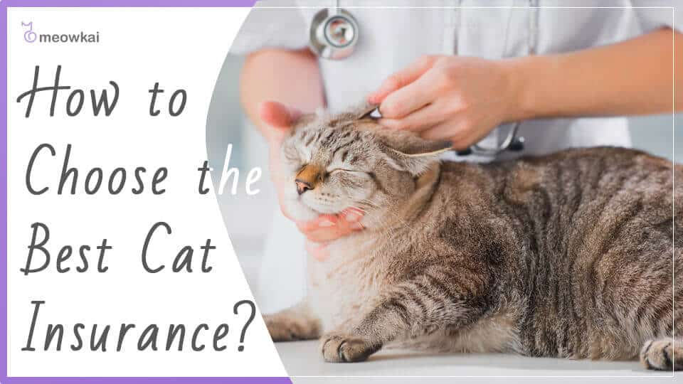 How-to-Choose-the-Best-Cat-Insurance