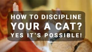 How to Discipline Your a Cat? Yes it's possible!