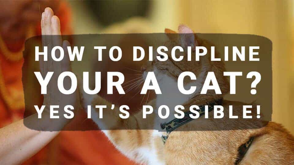 How-to-Discipline-Your-a-Cat