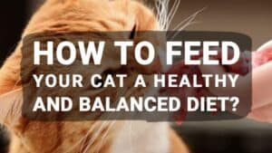 How to Feed Your Cat a Healthy and Balanced Diet?