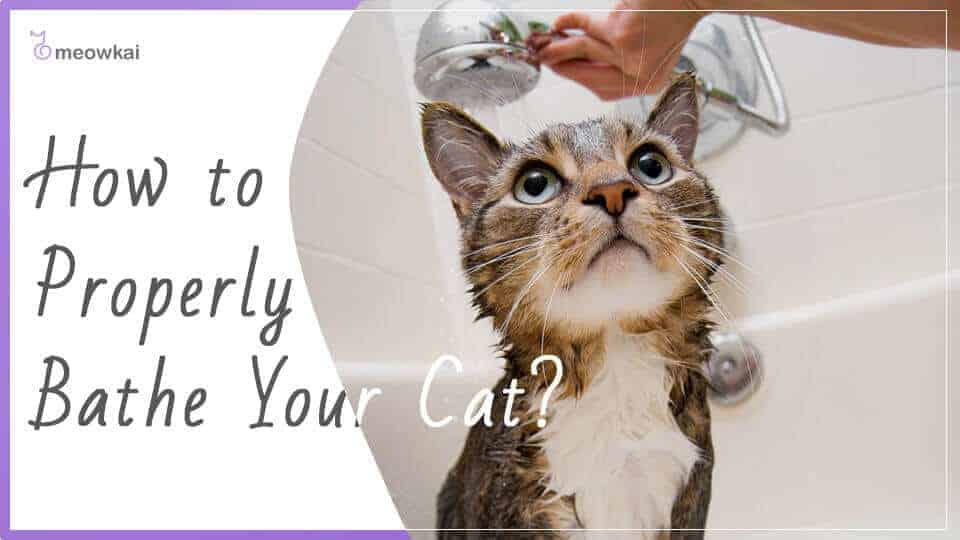 How-to-Properly-Bathe-Your-Cat