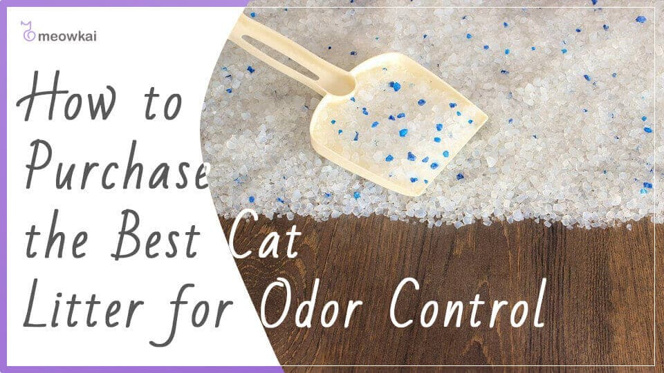 How-to-Purchase-The-Best-Cat-Litter-for-Odor-Control