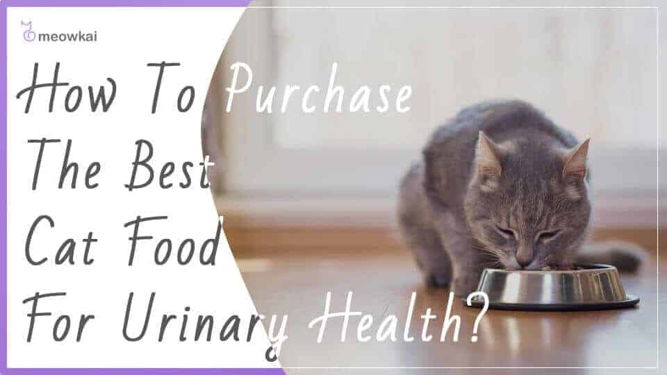 How-to-Purchase-the-Best-Cat-Food-For-Urinary-Health