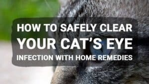 How to Safely Clear Your Cat's Eye Infection with Home Remedies