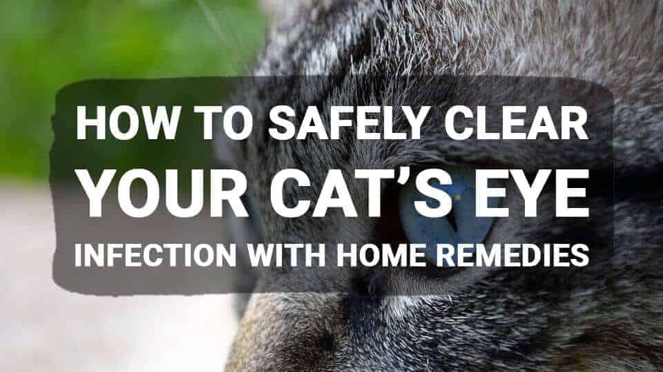 How-to-Safely-Clear-Your-Cats-Eye-Infection-with-Home-Remedies