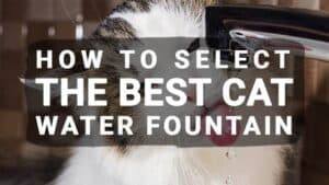How to Select the Best Cat Water Fountain (Updated 2019)