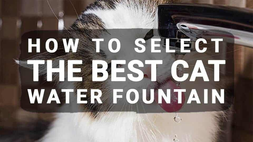 How-to-Select-the-Best-Cat-Water-Fountain