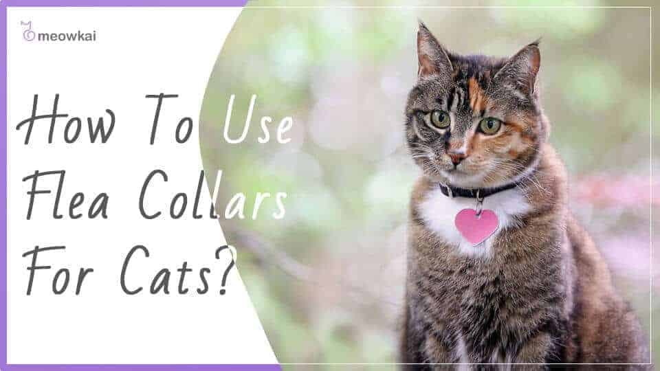 How-to-Use-Flea-Collars-for-Cats