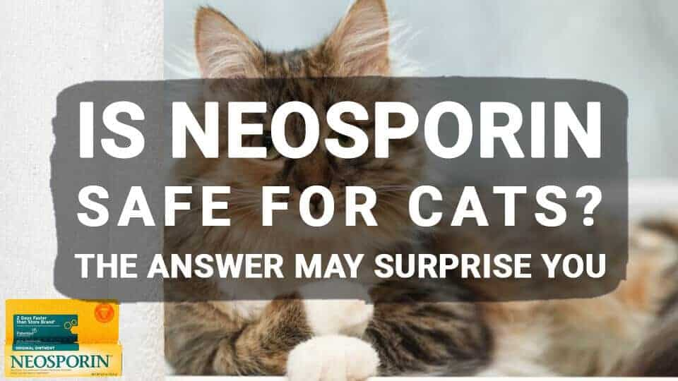Is Neosporin Safe for Cats? The Answer May Surprise You