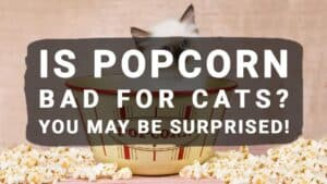 Is Popcorn Bad For Cats? You May Be Surprised!