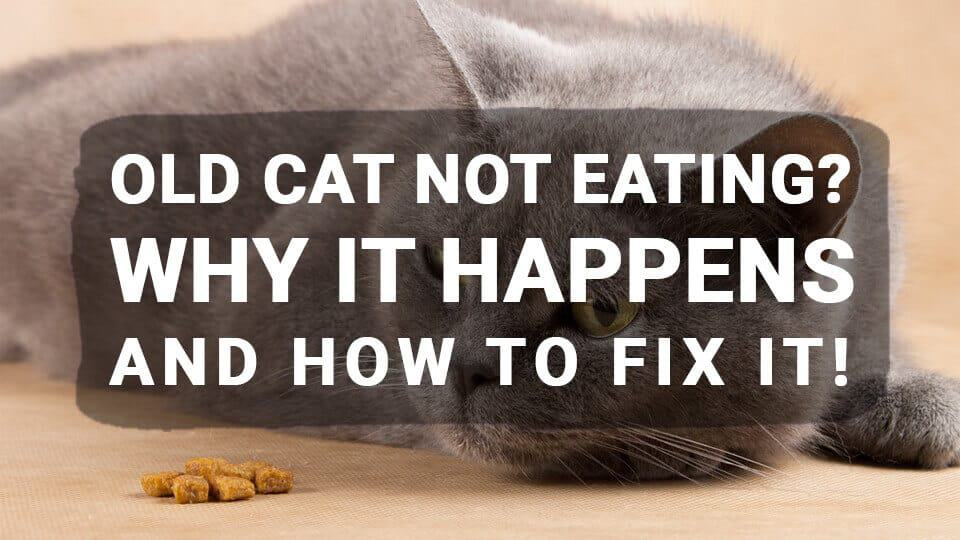 Old Cat Not Eating? Why It Happens and How to Fix It!