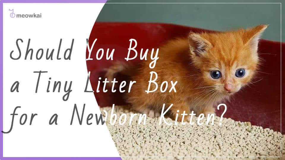 Should-You-Buy-a-Tiny-Litter-Box-for-a-Newborn-Kitten