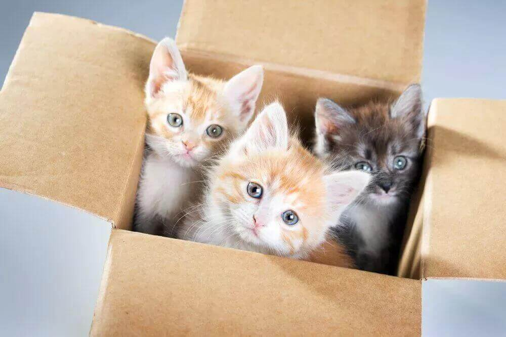 Small-cats-in-box