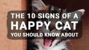 The 10 Signs of a Happy Cat You Should Know About
