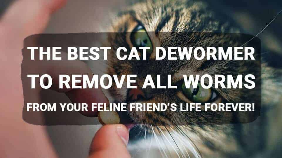 The Best Cat Dewormer to Remove All Worms from Your Feline Friend's Life Forever!