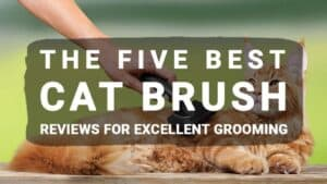 The Five Best Cat Brush Reviews For Excellent Grooming