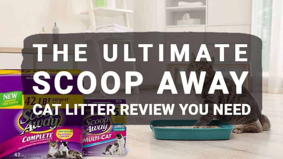 The-Ultimate-Scoop-Away-Cat-Litter