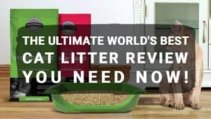 The Ultimate World's Best Cat Litter Review You Need Now!